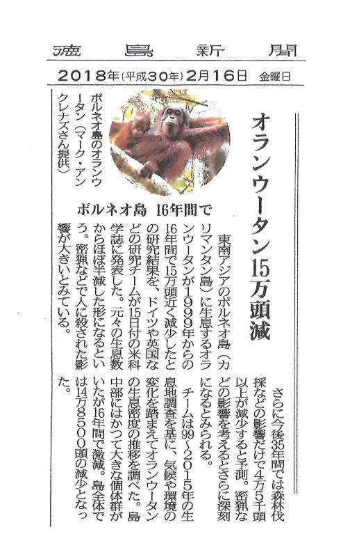 """徳島新聞""""ボルネオ島のオラウータン減少"""""""